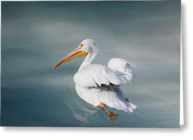 Seabirds Greeting Cards - Swimming Away Greeting Card by Kim Hojnacki