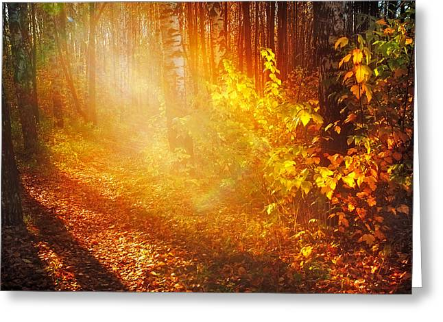 Amateur Photography Greeting Cards - Swimming in Golden Light Greeting Card by Jenny Rainbow