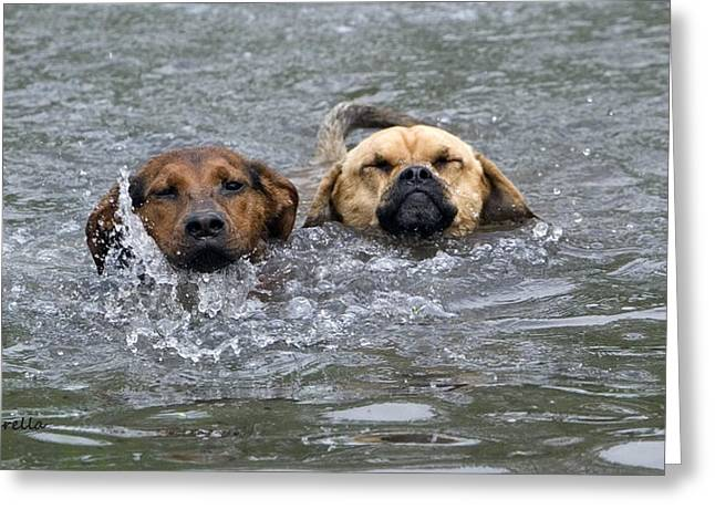 Puggle Greeting Cards - Swimming Lessons Greeting Card by Gerald Marella