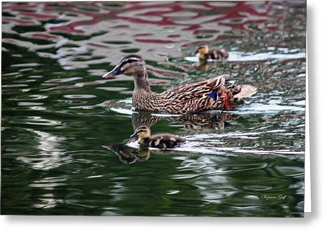 Ducklings Digital Greeting Cards - Swimming with Mama Greeting Card by Suzanne Gaff