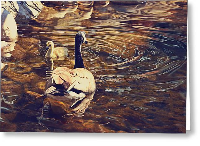 Mother Goose Greeting Cards - Swimming With Mom Greeting Card by Maria Angelica Maira