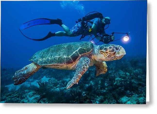 Snorkel Greeting Cards - Swimming With Turtle Greeting Card by Sandra Edwards