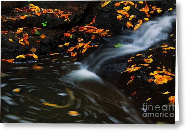 Black Rock Yellow Leaves Water Greeting Cards - Swirls Greeting Card by Melissa Petrey
