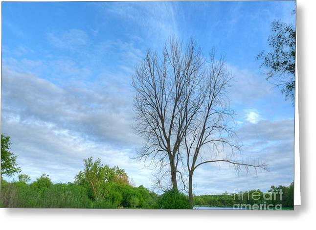 Nature Center Pond Greeting Cards - Swirly Sky and Tree Greeting Card by Deborah Smolinske