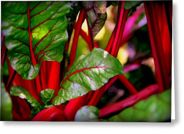 Green Abstract Greeting Cards - Swiss Chard Forest Greeting Card by Karen Wiles