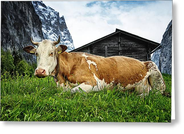 Swiss Greeting Cards - Swiss Miss Greeting Card by Ryan Wyckoff