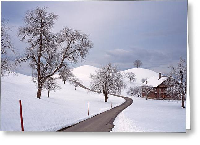 Bare Trees Greeting Cards - Switzerland, Canton Of Zug, Linden Greeting Card by Panoramic Images