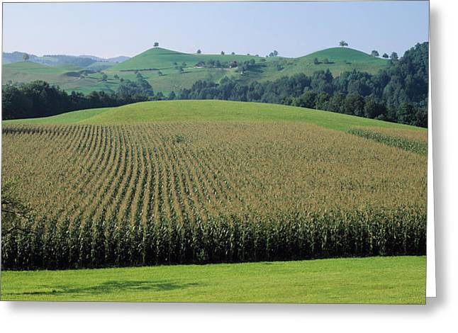Cornfield Greeting Cards - Switzerland, Canton Zug, Panoramic View Greeting Card by Panoramic Images
