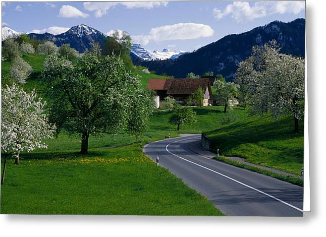 Small Towns Greeting Cards - Switzerland, Luzern, Trees, Road Greeting Card by Panoramic Images
