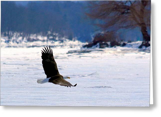 Saugerties Greeting Cards - Swooping Eagle Greeting Card by Keith Kopycinski
