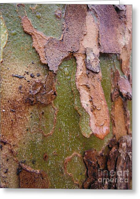 American Sycamore Greeting Cards - Sycamore Bark 1 Greeting Card by Paddy Shaffer