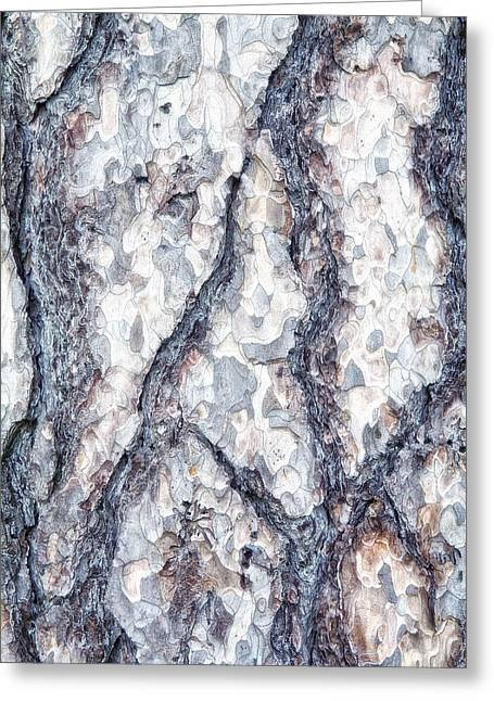 Shell Texture Greeting Cards - Sycamore Bark Abstract Greeting Card by Tom Mc Nemar