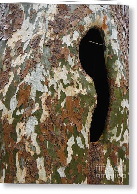 American Sycamore Greeting Cards - Sycamore Camouflage Greeting Card by Paddy Shaffer