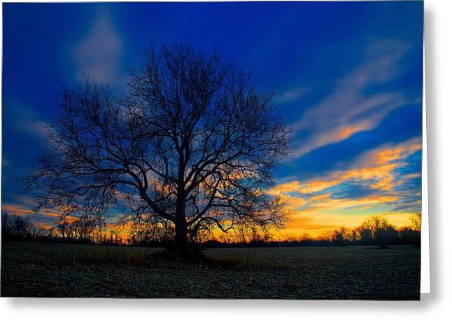 American Sycamore Greeting Cards - Sycamore Sunset Greeting Card by William Jobes