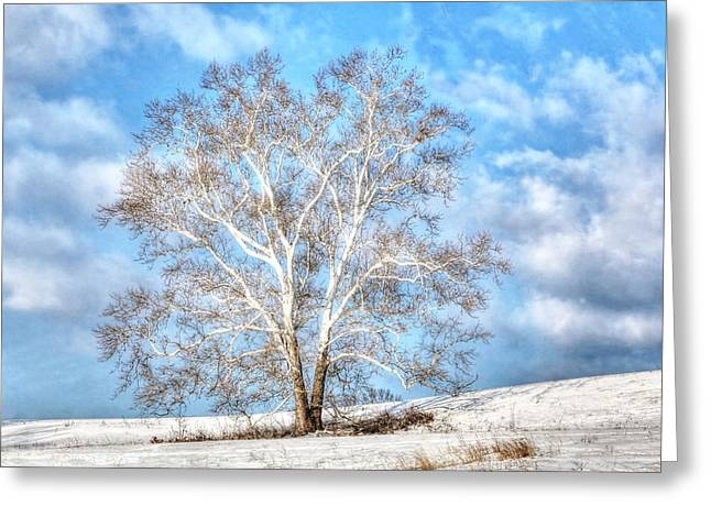 Sycamore Winter Greeting Card by Jaki Miller