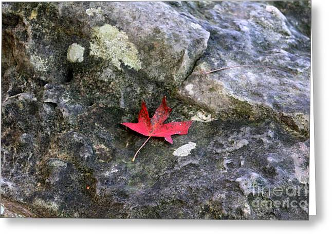 Warner Park Greeting Cards - Sylvia Singleleaf Greeting Card by Laurette Escobar
