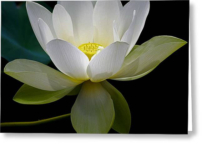 Julie Palencia Greeting Cards - Symbolic White Lotus Greeting Card by Julie Palencia