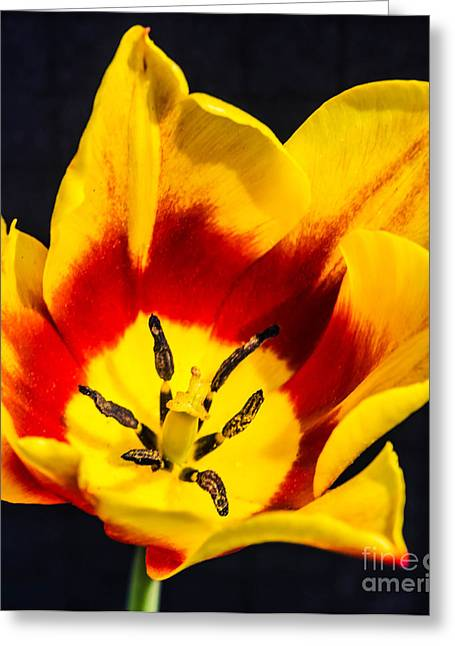 Wholesale Flowers Online Greeting Cards - Synaeda 4 Greeting Card by Courtney Trusty