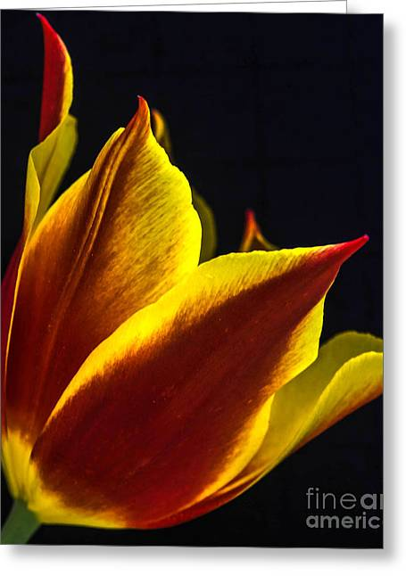 Wholesale Flowers Online Greeting Cards - Synaeda 6 Greeting Card by Courtney Trusty