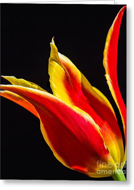 Wholesale Flowers Online Greeting Cards - Synaeda 7 Greeting Card by Courtney Trusty