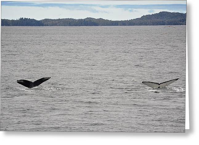 Ocean Mammals Greeting Cards - Synchronized Diving Humpbacks Greeting Card by Mary Lee Dereske