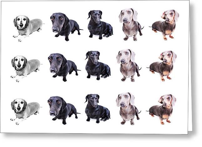 Hounddog Greeting Cards - Szymanski Pack Composite Greeting Card by Johnny Ortez-Tibbels