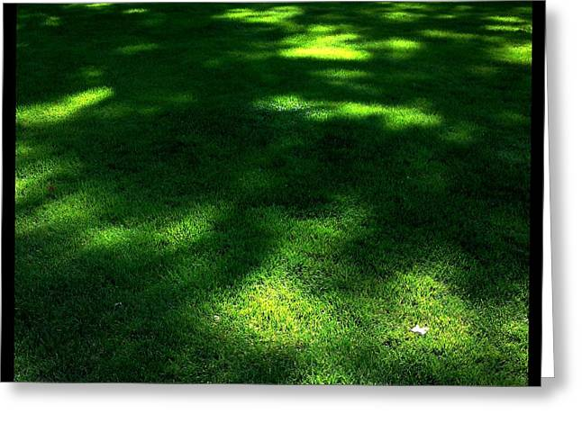Dappled Light Greeting Cards - T-2014-0810-0351 Greeting Card by David Truog