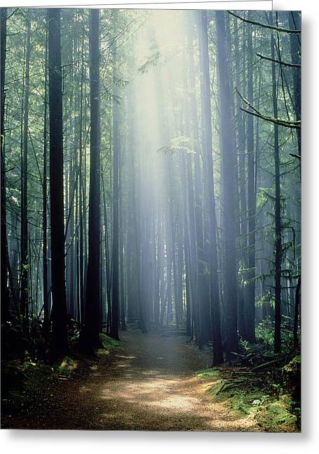 China Beach Greeting Cards - T. Bonderud Path Through Trees In Mist Greeting Card by First Light