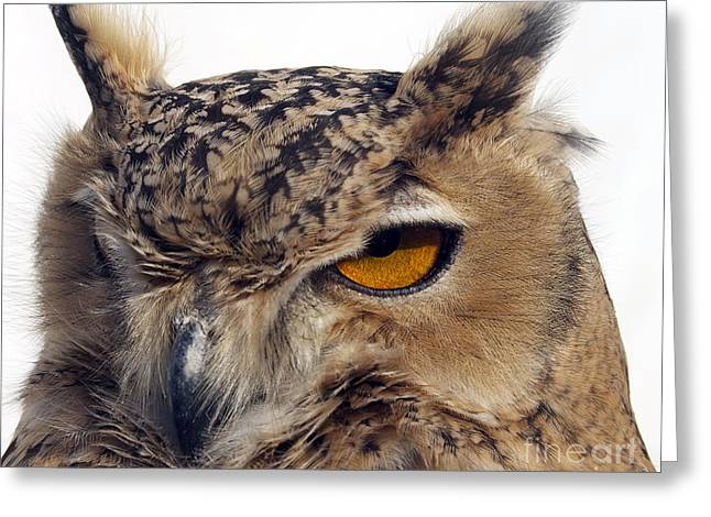 Names Of Birds Greeting Cards - The Eagle Eye Greeting Card by Skip Willits