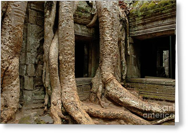 Traveling In Cambodia Greeting Cards - Ta Prohm 2 Greeting Card by Bob Christopher