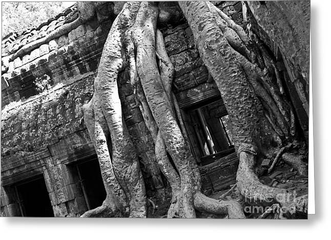 Tree Roots Greeting Cards - Ta Prohm Roots And Stone 03 Greeting Card by Rick Piper Photography