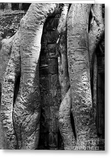 Tree Roots Greeting Cards - Ta Prohm Roots And Stone 04 Greeting Card by Rick Piper Photography