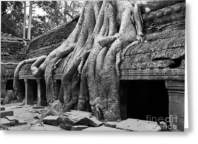Tree Roots Greeting Cards - Ta Prohm Roots And Stone 11 Greeting Card by Rick Piper Photography