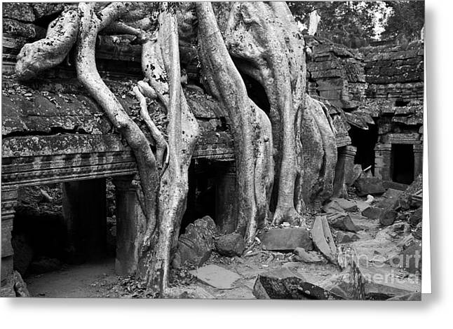 Tree Roots Greeting Cards - Ta Prohm Roots And Stone 13 Greeting Card by Rick Piper Photography