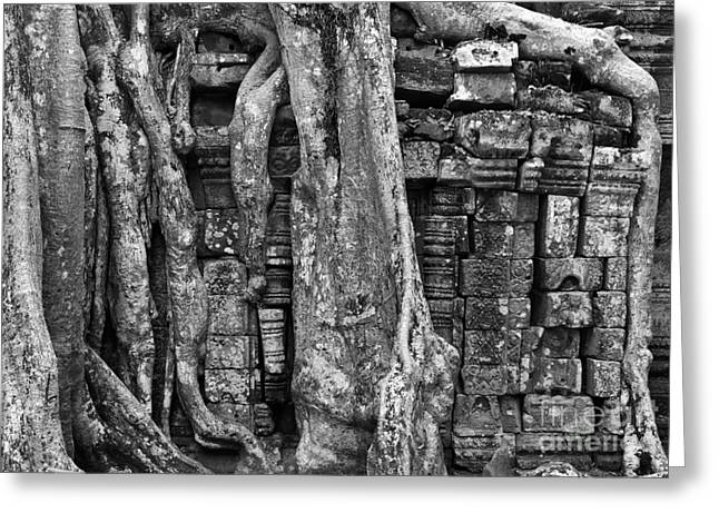 Tree Roots Greeting Cards - Ta Prohm Roots And Stone 16 Greeting Card by Rick Piper Photography