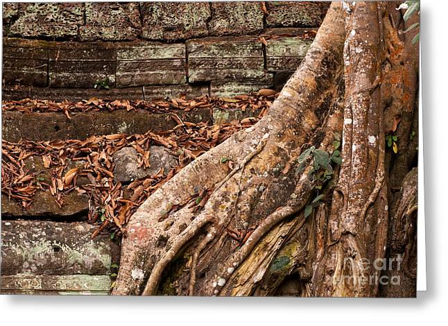 Tree Roots Greeting Cards - Ta Prohm Roots And Stone 17 Greeting Card by Rick Piper Photography