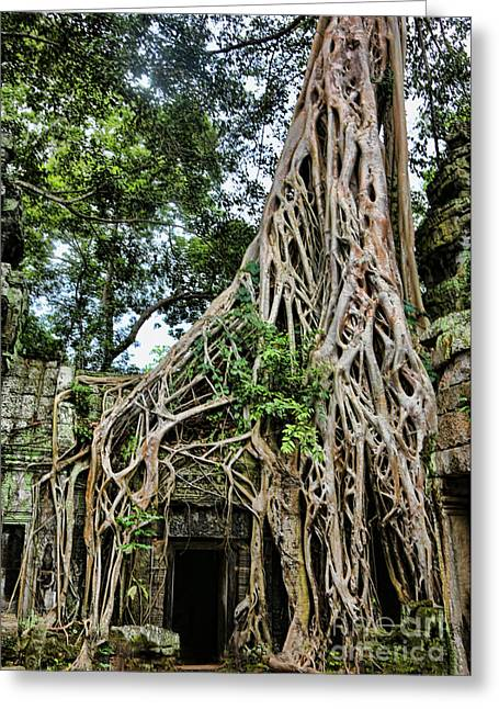 Tree Roots Greeting Cards - Ta Prohm Roots Greeting Card by Chuck Kuhn