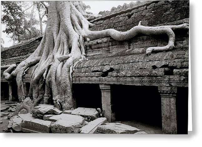 Temple Of Ta Prohm Greeting Cards - Ta Prohm Ruins Greeting Card by Shaun Higson