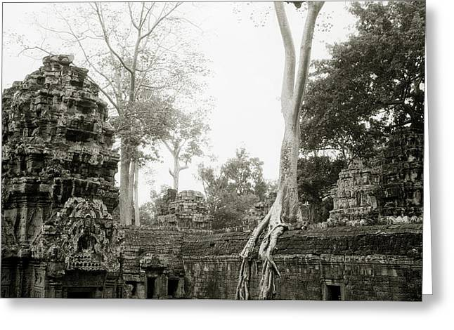 Temple Of Ta Prohm Greeting Cards - Ta Prohm  Greeting Card by Shaun Higson