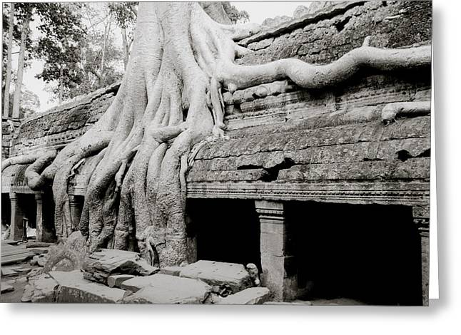 Temple Of Ta Prohm Greeting Cards - Ta Prohm Temple At Angkor Greeting Card by Shaun Higson