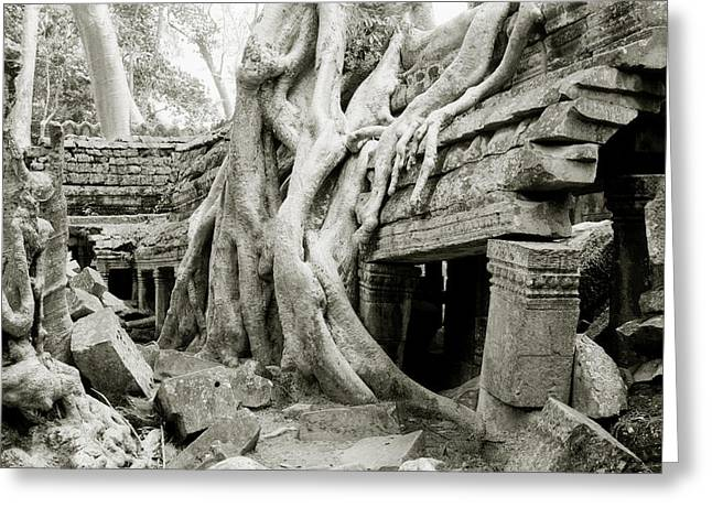 Temple Of Ta Prohm Greeting Cards - Ta Prohm Temple Greeting Card by Shaun Higson