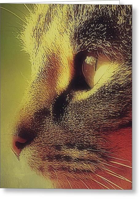 Photos Of Cats Photographs Greeting Cards - Tabby Cat Close Up Profile Greeting Card by Anne Macdonald