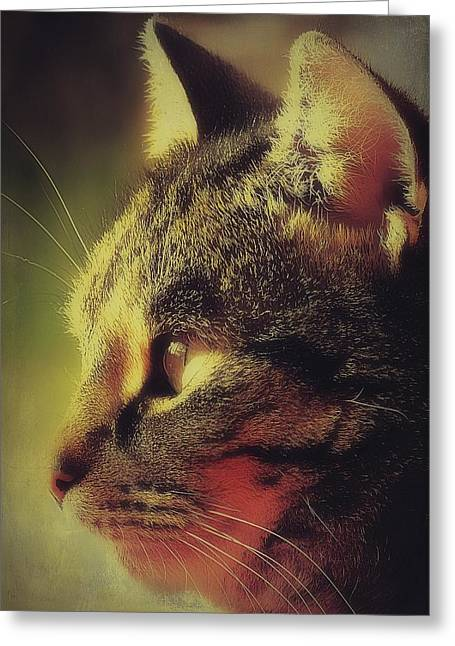 Photos Of Cats Greeting Cards - Tabby Cat Profile Greeting Card by Anne Macdonald