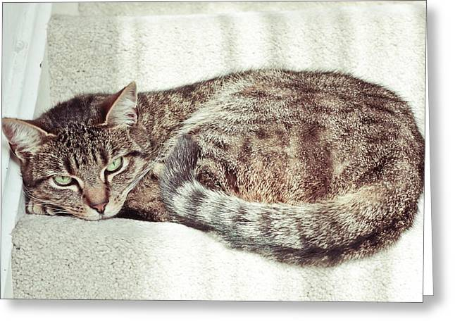 Tabby Cat Greeting Card by Tom Gowanlock