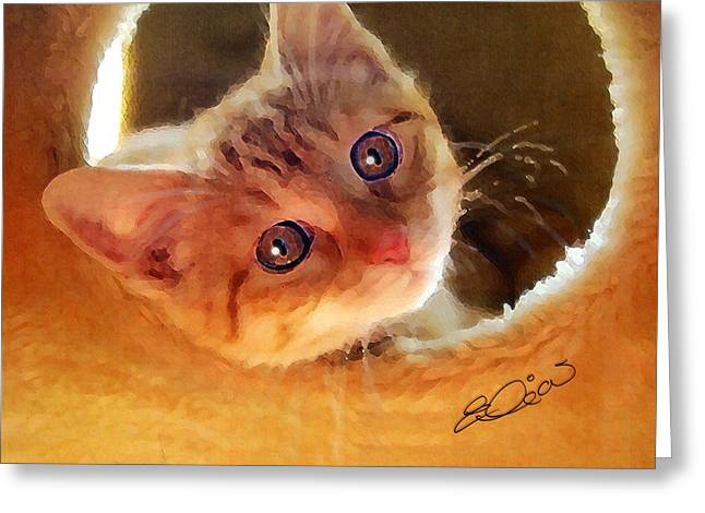Kitten Prints Mixed Media Greeting Cards - Tabby in Red Greeting Card by Elia Peters