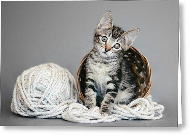 Shelter Kitty Greeting Cards - Tabby Kitten and Yarn - Animal Rescue Portraits Greeting Card by Andrea Borden