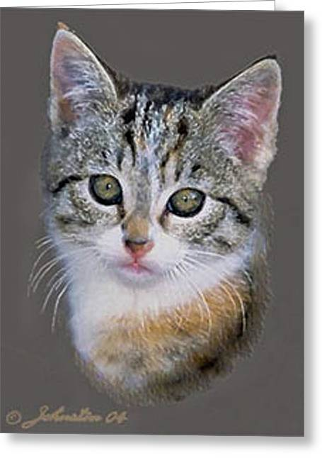 Vertebrate Mixed Media Greeting Cards - Tabby  Kitten Greeting Card by  Bob and Nadine Johnston