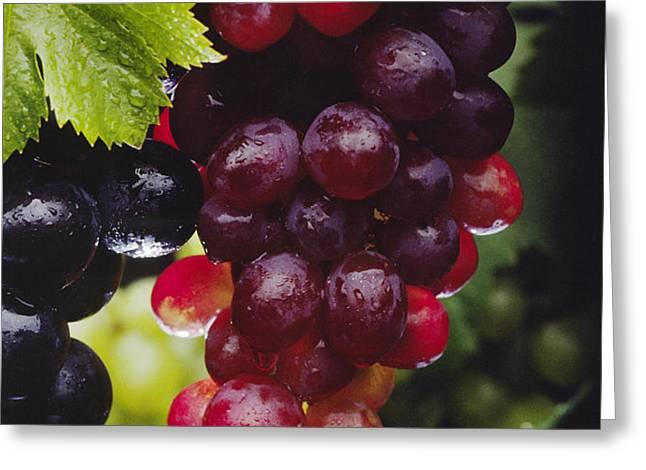 Table Grapes Closeup Greeting Card by Craig Lovell