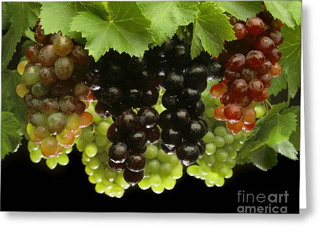 Concord Grapes Greeting Cards - Table Grapes Greeting Card by Craig Lovell
