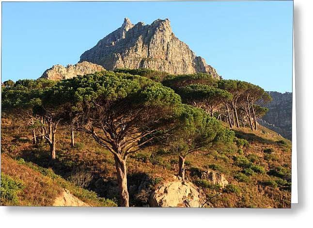 Cape Town Greeting Cards - Table Mountain View Greeting Card by Aidan Moran